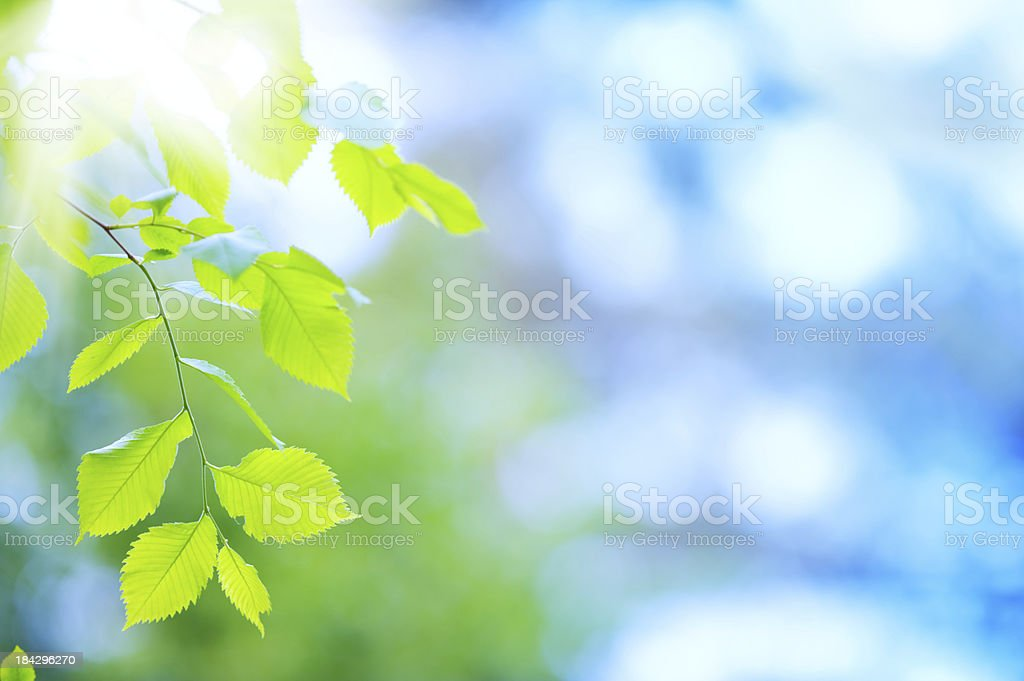 Fresh and green leaves stock photo