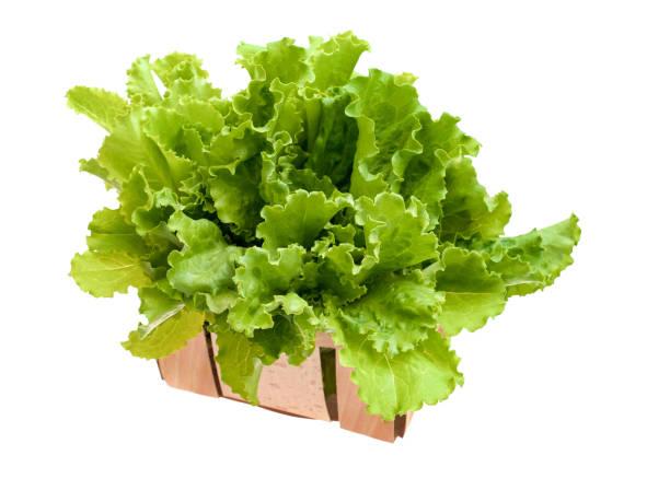Verse en groene sla op witte achtergrond, voedsel concept foto