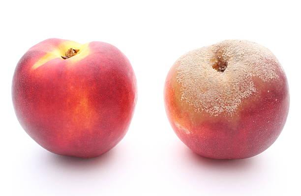 Frische und moldy Pfirsich auf weißem Hintergrund – Foto