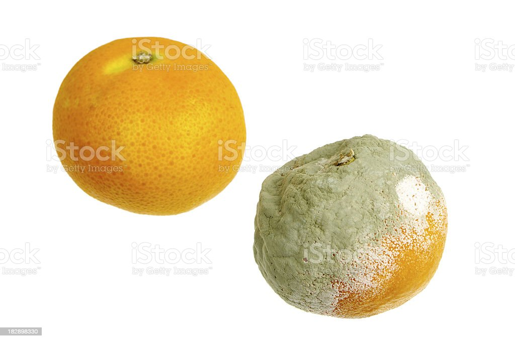 Fresh And Mouldy Oranges Isolated On White royalty-free stock photo