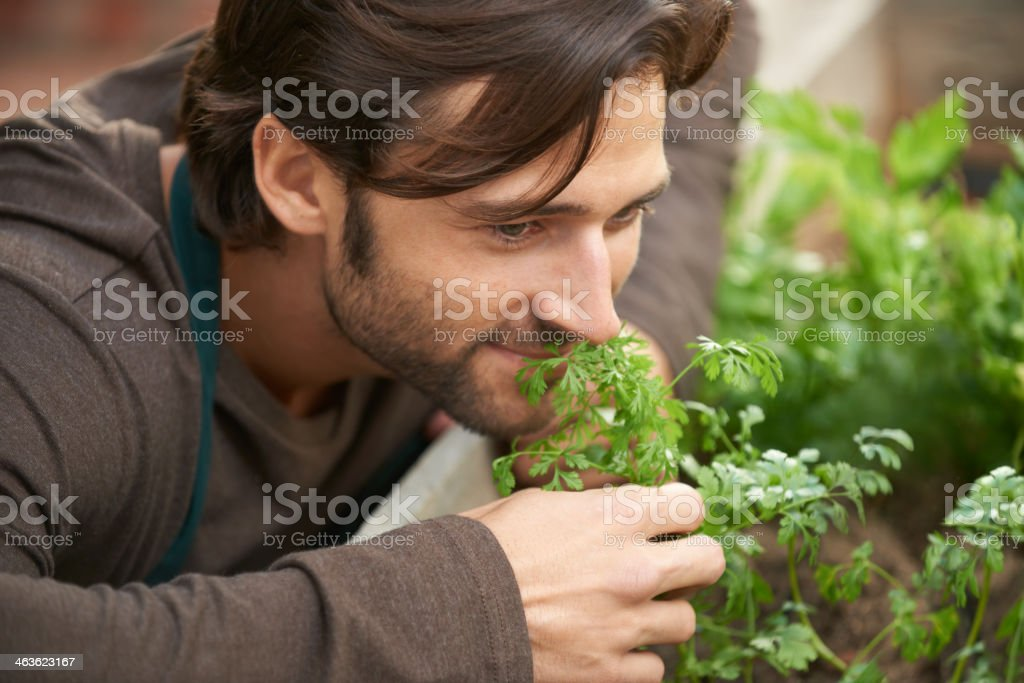 Fresh and organic herbs royalty-free stock photo