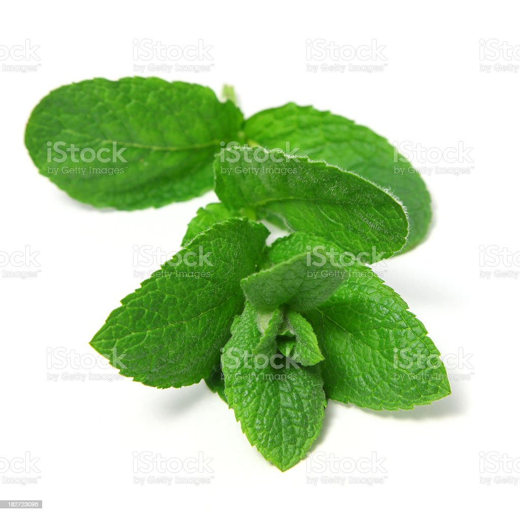 Fresh and picked peppermint leaves stock photo