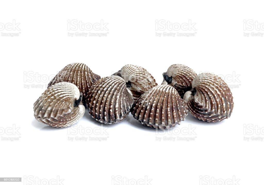 conchas de berberechos frescos y crudos pescados y mariscos en fondo blanco aislado - foto de stock