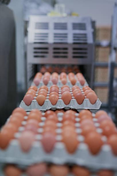 frisch und munter zu verpackenden - eierverpackung stock-fotos und bilder