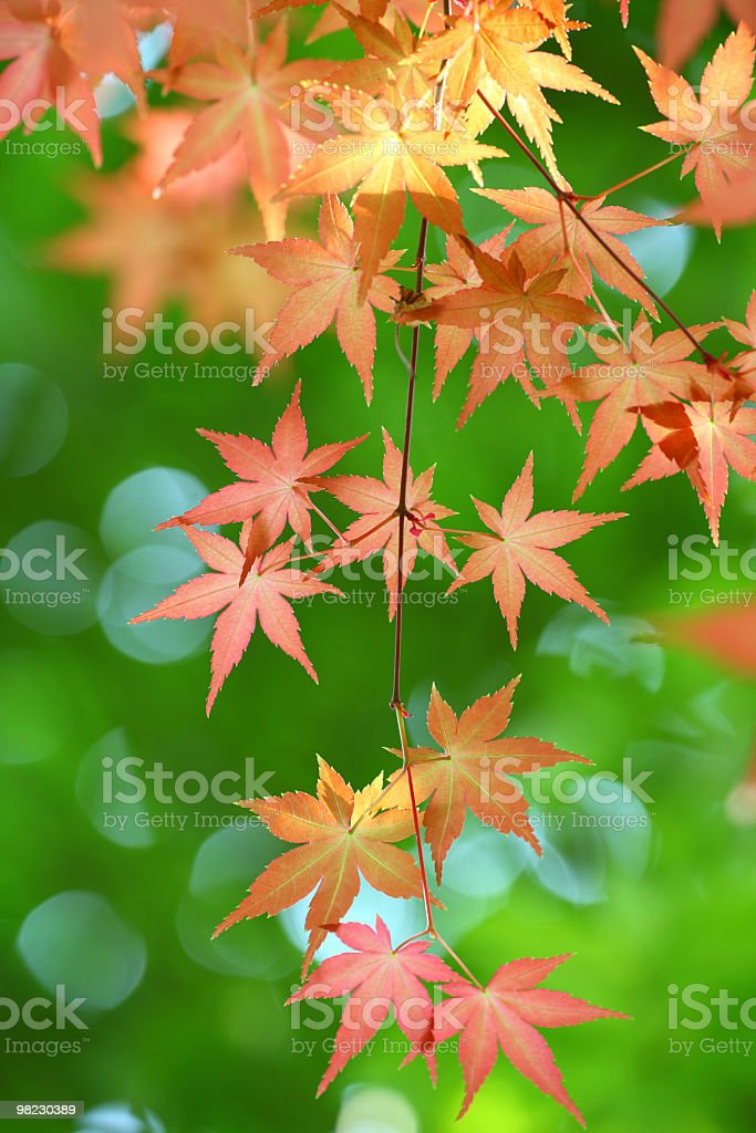 Fresh And Red Leaves royalty-free stock photo