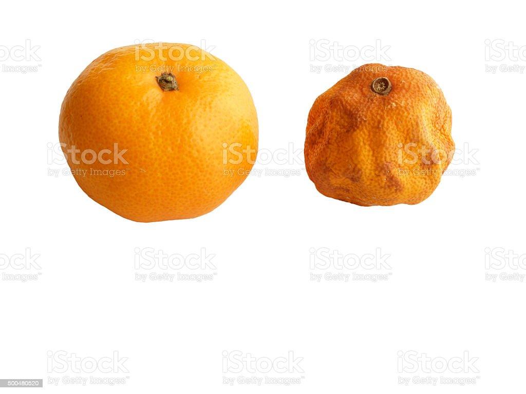 Fresh and Rotten Mandarin Orange on White. stock photo