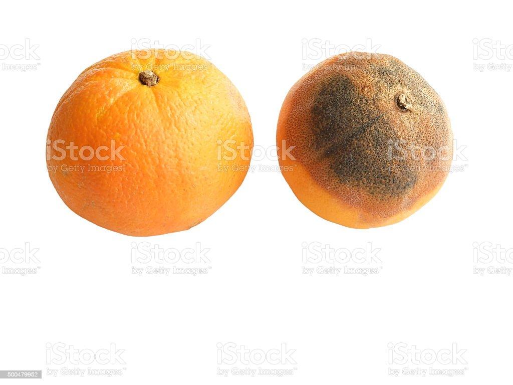 Fresh and Rotten Orange on White. stock photo