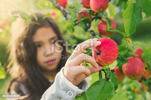 A child picking apples from a tree in a garden.