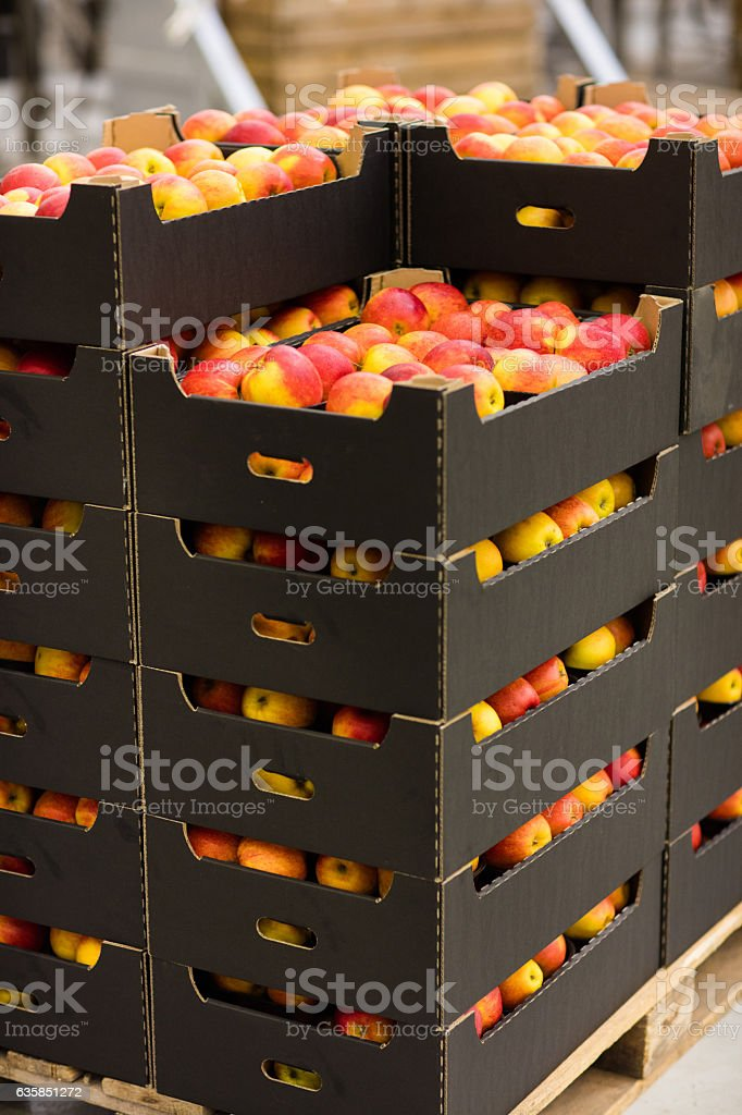 Fresh apples in boxes stock photo