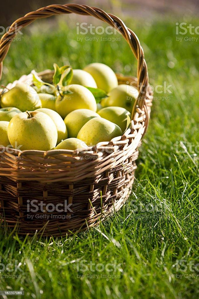 Fresh apples royalty-free stock photo