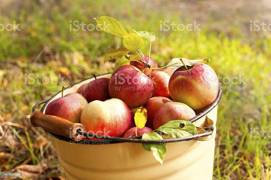 Frische Äpfel – Foto