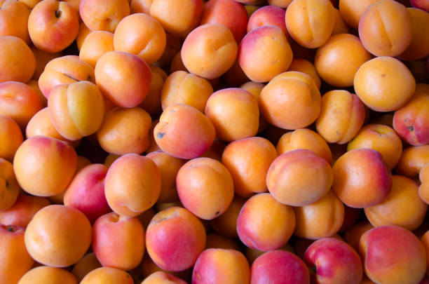 Fresh apricots arranged as a background stock photo