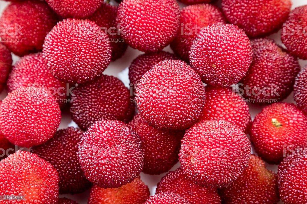 Fresh arbutus stock photo