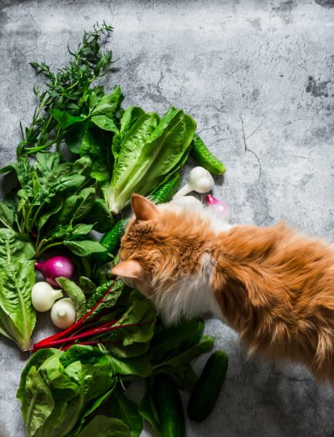 Fresh aromatic herbs vegetables and a curious red kitten on a gray picture id1253980109?b=1&k=6&m=1253980109&s=612x612&w=0&h=zubfywv5k6bhzqkgmaak2vmnnjd0qmm7qwnexmpixae=