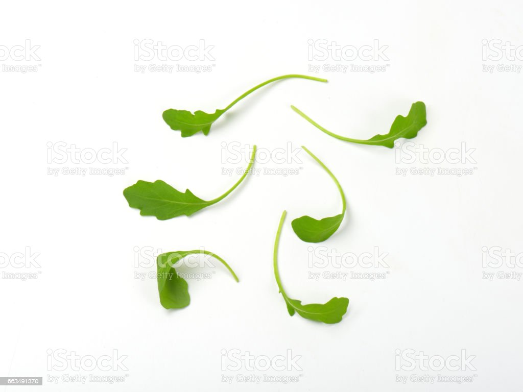fresh arugula leaves stock photo