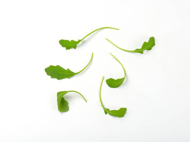 아루굴라, 신선한 잎은 - 아루굴라 뉴스 사진 이미지