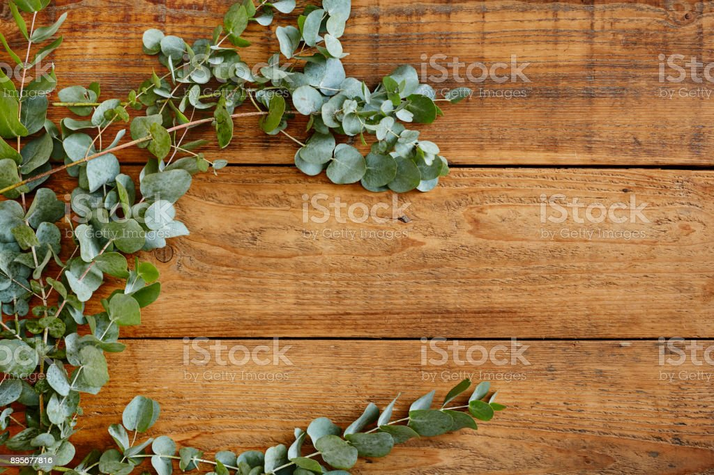 fresh australian eucalyptus on wooden table stock photo