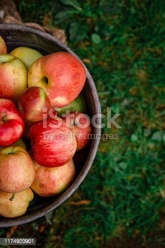 istock Fresh Autumn Apple Bucket on a Farm 1174920901