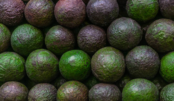Fresh avocado background stock photo