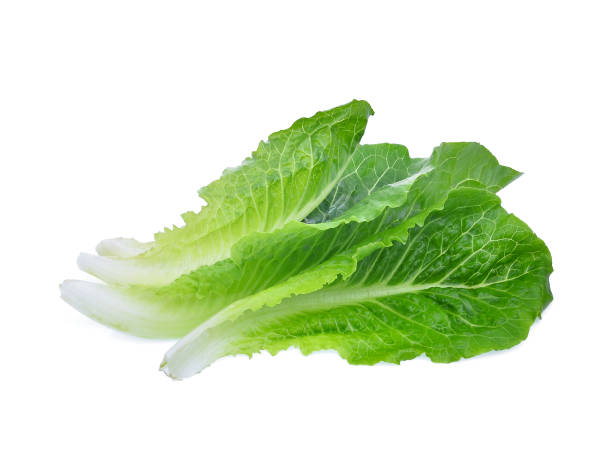 fresh baby cos,lettuce leaf isolated on white background fresh baby cos,lettuce leaf isolated on white background romaine lettuce stock pictures, royalty-free photos & images