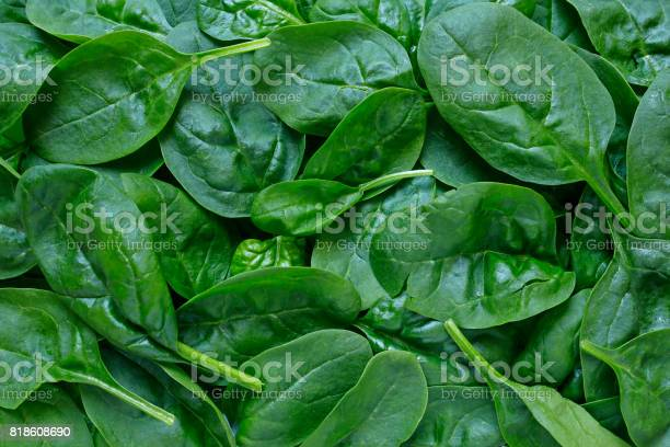 Fresh baby spinach background picture id818608690?b=1&k=6&m=818608690&s=612x612&h=6yjwah7vsoofcdhigeyqmro rgtfttbs1oapttt3ajc=
