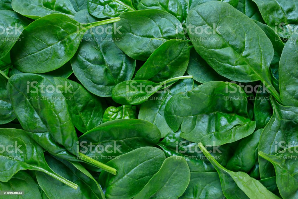 fresh baby spinach background stock photo