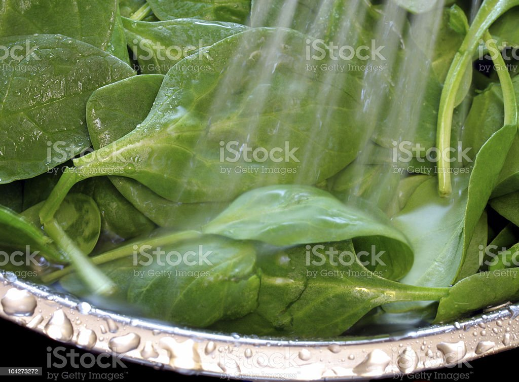 Fresh Baby Spinach royalty-free stock photo