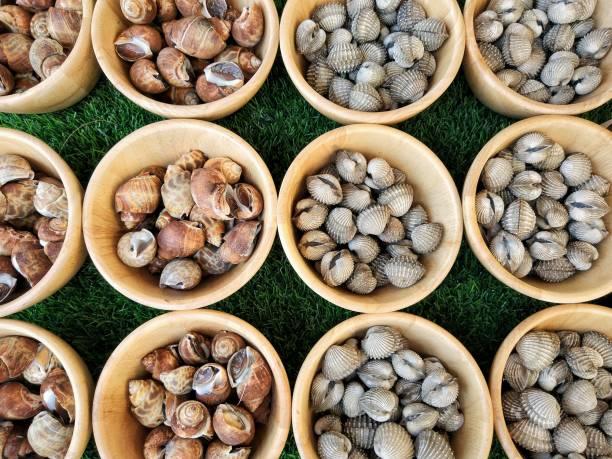 fresh babylonia areolata and fresh cockles in market - weichtiere stock-fotos und bilder