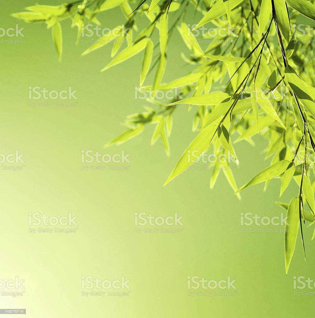 Fresh bamboo leaves border royalty-free stock photo