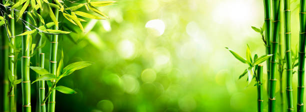 Fresh Bamboo Trees In Forest With Blurred Background stock photo