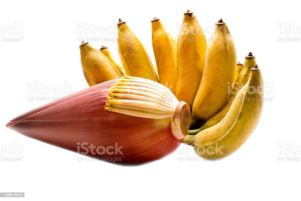 Fresh banana fruits with a banana blossom on white background stock photo
