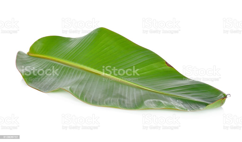 fresh banana leaf on white background stock photo