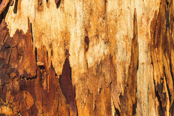 Fresh bark on tree trunk after forest fire stock photo