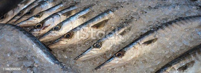 fresh barracuda at a fish market