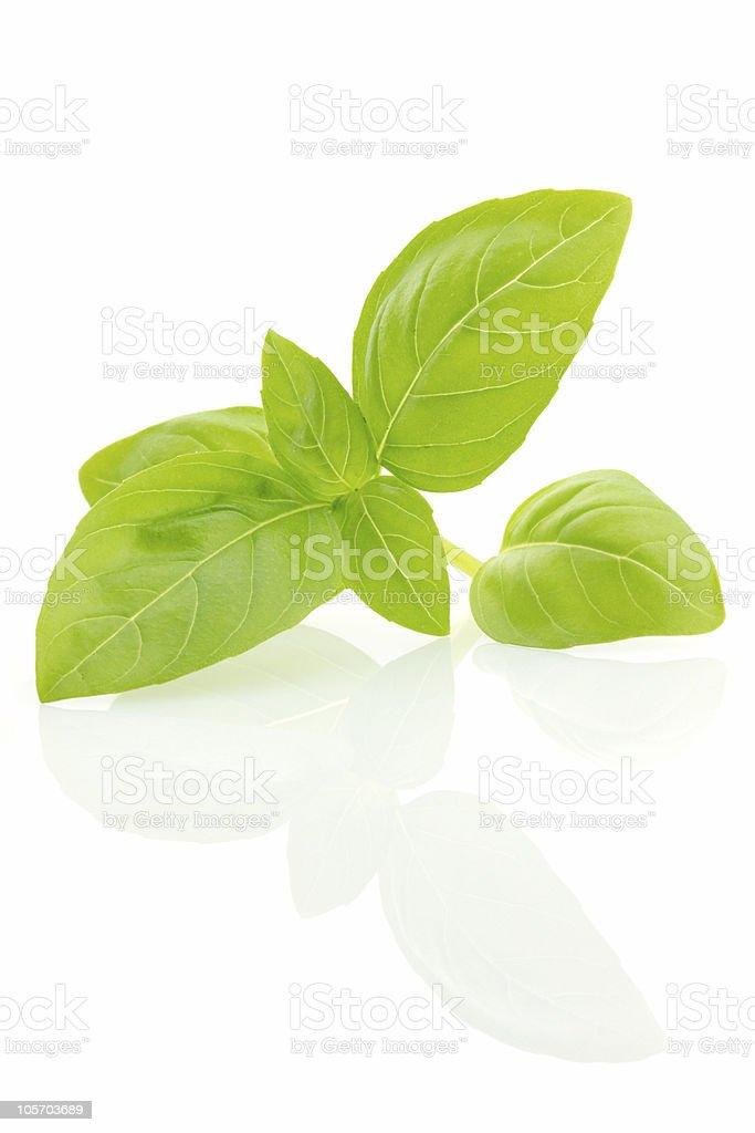 Fresh basil leaves, isolated royalty-free stock photo