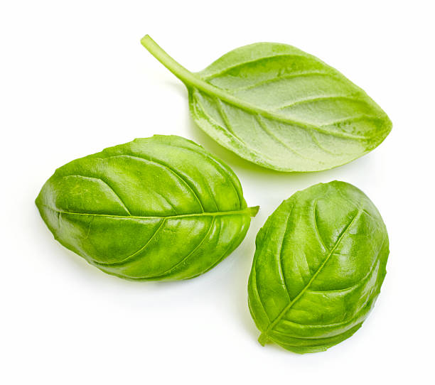 fresh basil leaves - basil stock photos and pictures