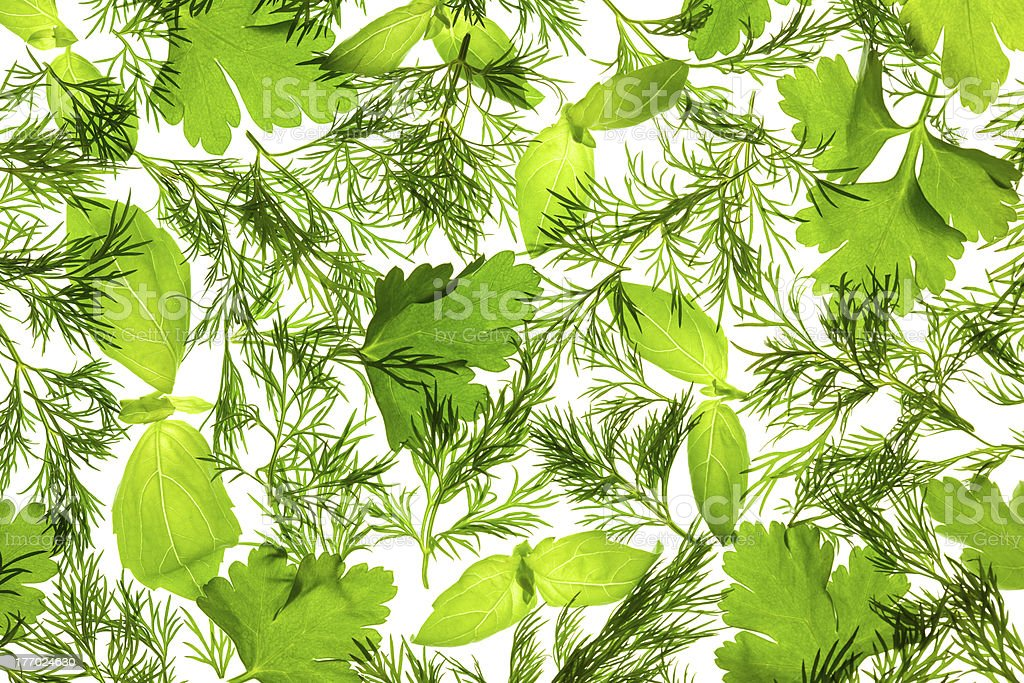 Fresh Basil, Parsley and Dill / background stock photo