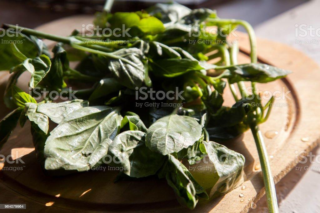 fresh basil - Royalty-free Basil Stock Photo