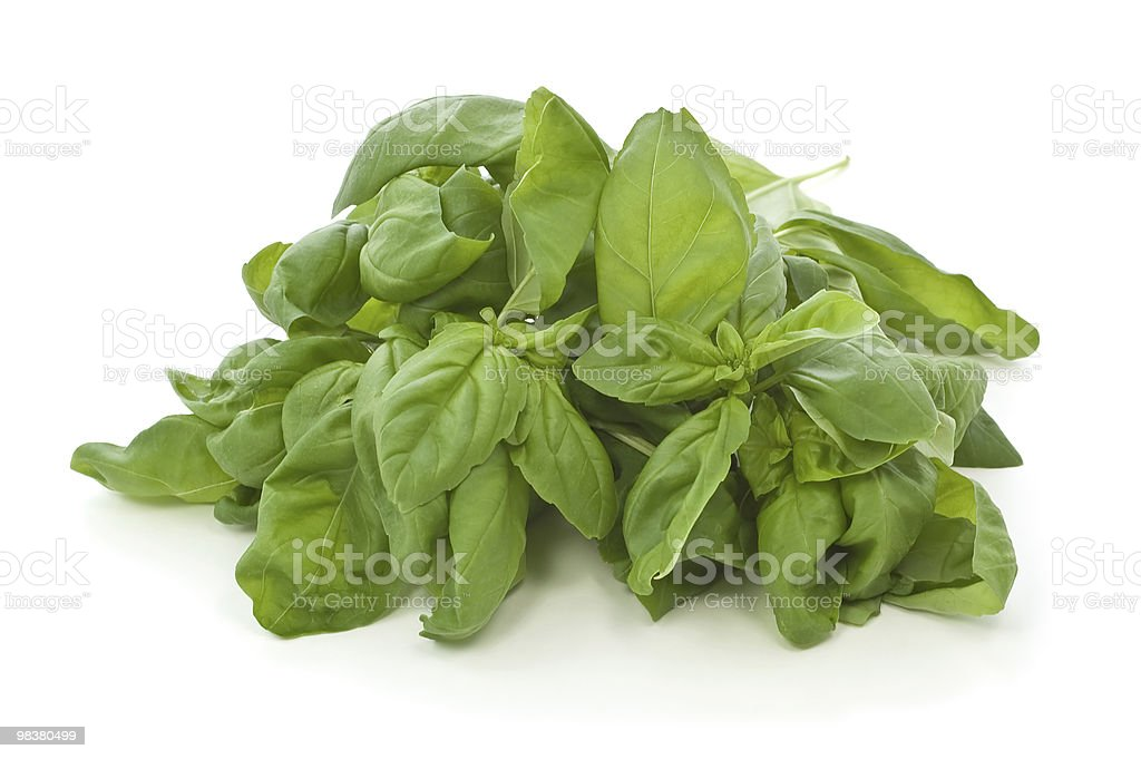 Fresh basil royalty-free stock photo