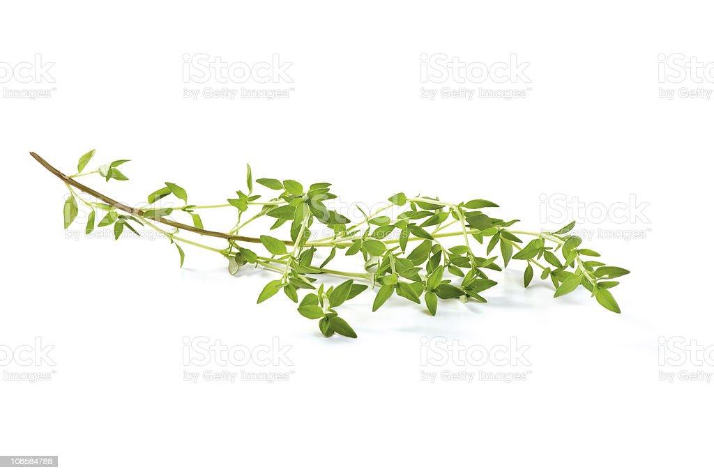 Fresh Basil twig royalty-free stock photo