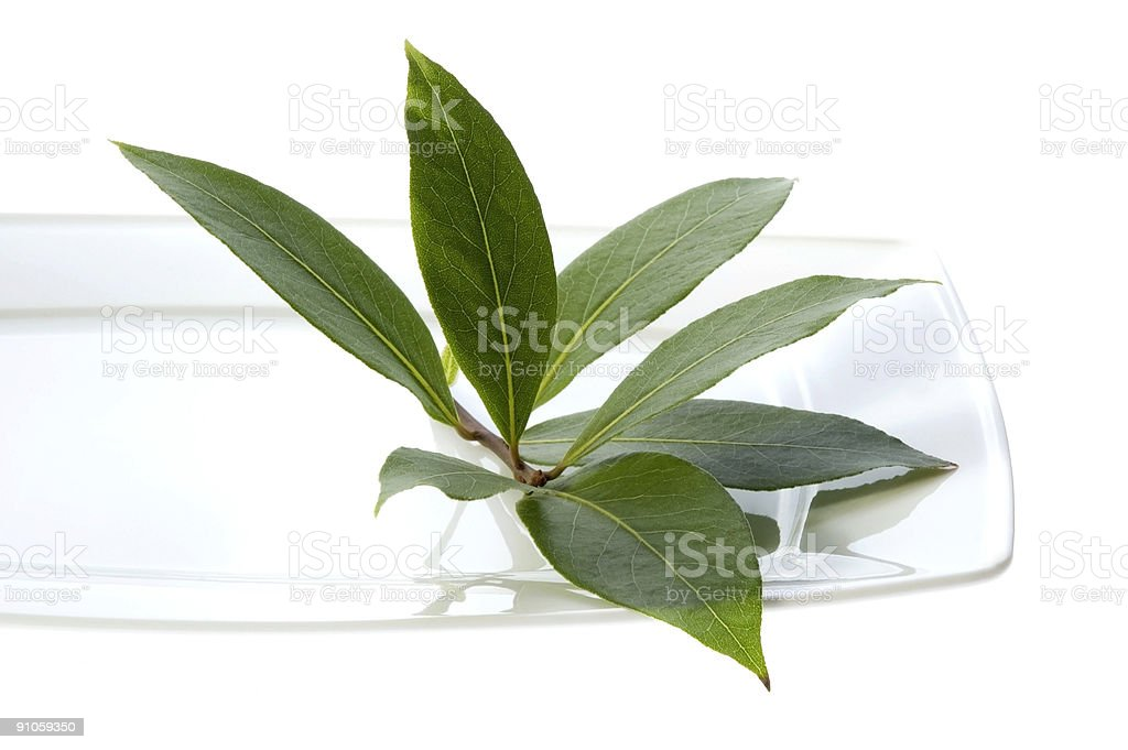 fresh bay leaves royalty-free stock photo