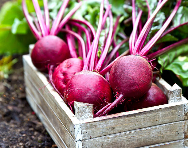 Fresh beetroots in wooden tray. Beet with leaves. Freshly picked beetroots in wooden tray. beet stock pictures, royalty-free photos & images