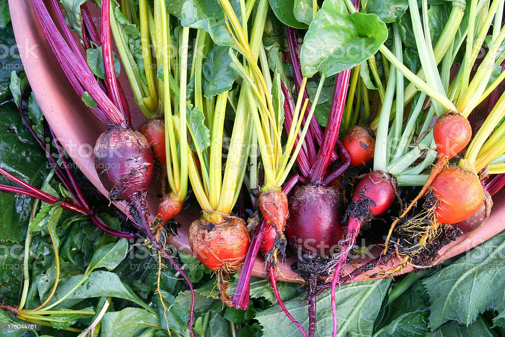 Fresh Beets royalty-free stock photo
