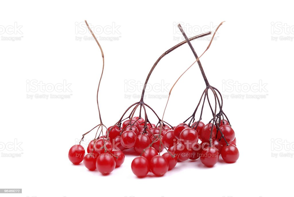 Fresh berries clusters of a cranberry royalty-free stock photo