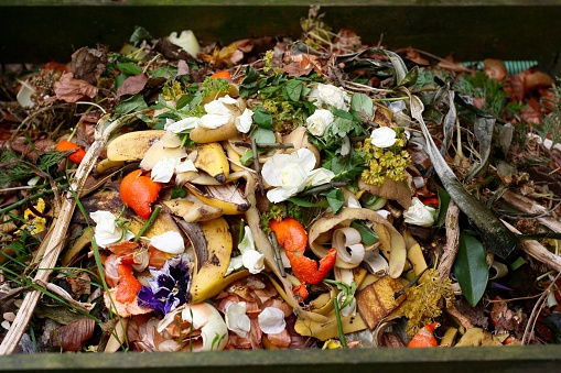 Fresh Biowaste And Compost Stock Photo - Download Image Now