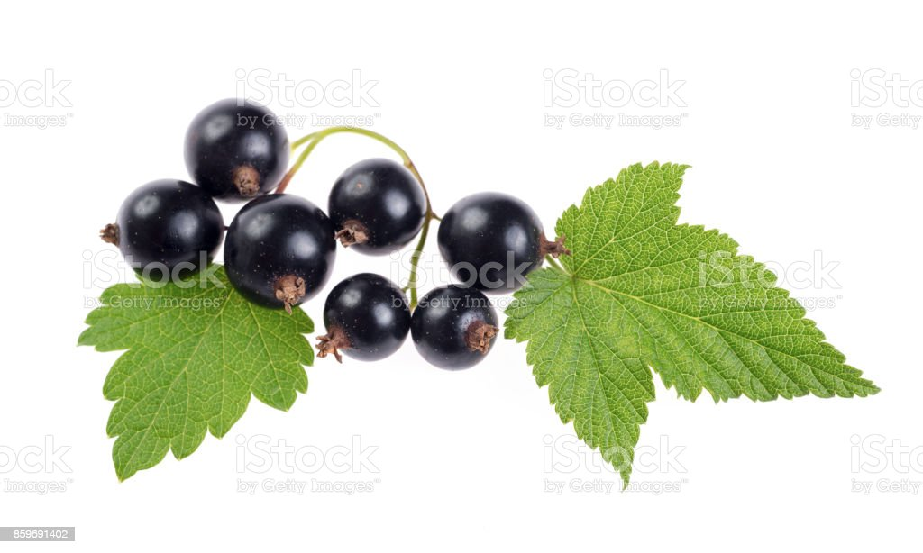 Fresh black currant isolated on white background stock photo