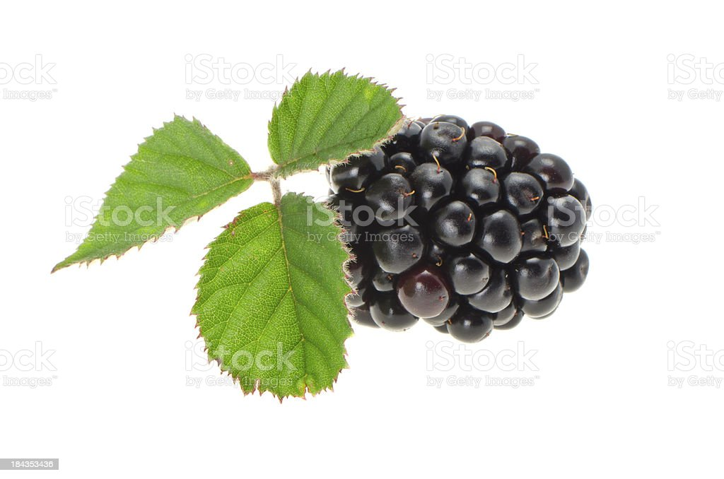 Fresh blackberry with leaves royalty-free stock photo