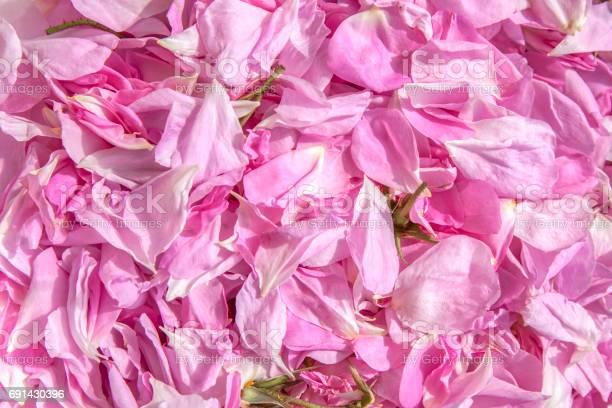 Fresh blossoms of roses picture id691430396?b=1&k=6&m=691430396&s=612x612&h=6ixbvjfxzirtyioeupuxbbzzttat480qkguirnkc8ns=