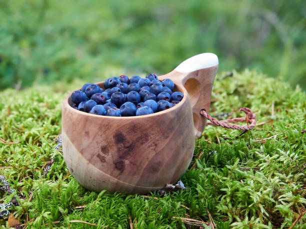 Fresh blueberries in wooden cup stock photo