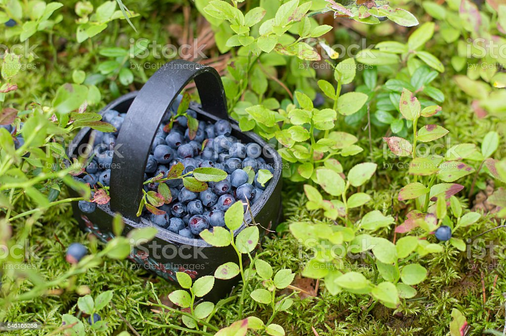 Fresh blueberry in basket stock photo